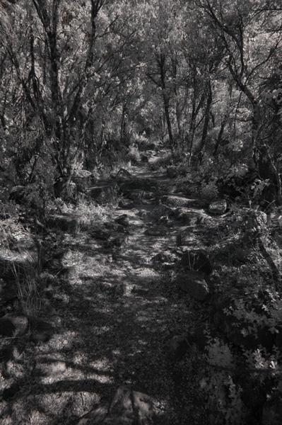 Инфракрасная фотография - лесная тропинка